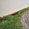 レイアウト 湿原そして天陽くん?