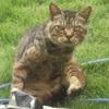 【写真有】庭にずんぐりむっくりな猫がいて、ガンを飛ばされた話