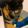 【愛猫日記】毎日アンヌさん#157