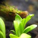 あきの水草ブログ