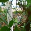 荻窪の三角点「天沼」