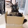 箱をカスタマイズ。