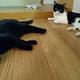 今日の黒猫モモ&白黒猫ナナの動画ー1052