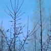 老の山公園の梅林