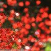 紅葉を撮りに京都へ その3 北野天満宮