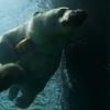 ホッキョクグマもアザラシも飛ぶ!円山動物園ホッキョクグマ館の水中トンネル