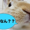 【うさぎの飼い方】初心者さん向けうさぎの飼育方法!うさぎのにおいとは??