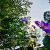 【花・風・草木と、蝶の歌】