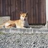 【坊勢島】ネコはいない。犬はいる。犬の島だよ坊勢島!