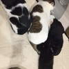 黒猫(ミコ♀)危機一髪!
