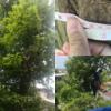 【北向き裏庭の庭づくり③】大木の伐採・処分をネットで業者に依頼!~業者の選び方・伐採費用・適切な作業時期について紹介