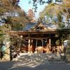 多摩川・阿蘇神社のシイ