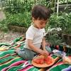 庭ピクニックとスズメバチ