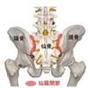 仙腸関節痛の症状と効果的な治療法とは?