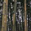 金の竹 キンメイチクの里へ