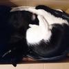 今日の黒猫モモ&黒白猫ナナの動画はお休みです!