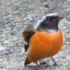 「冬告げ鳥」の来訪と共に急に寒くなったが、お寒いのは他にも!(その2)