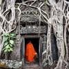 #アンコールワット個人ツアー(326) #タ•プローム寺院のガジュマルの木