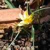 早春の庭から(クロッカス、キッチン・ハーブ)