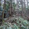 ナバ谷中央尾根から住吉道へのハイキング(その3)ナバ谷中央尾根