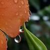 🌺スマホで水滴の花を撮影しました!