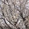 新型コロナウイルス感染症対策 3/13 (土) ペア割