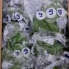 野菜1ケースって、入数が同じ野菜でも異なること知ってますか?