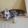 猫を飼う オススメサイトと日本との違いなど