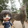 【正月旅】旅の折返し、奈良で鹿に追われるの巻【6日目】