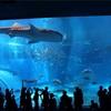 沖縄旅行2日目 - 美ら海水族館にいってきた