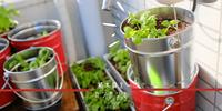 【ベランダ菜園】植木鉢をカンカンで。