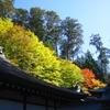三峯神社と紅葉と青空と