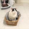 【緊急のお願い】長野県で60匹の猫の多頭飼育崩壊