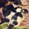 気が重いときは猫に限る。