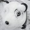 いつもの景色が一変『岡崎市近所の雪鑑賞』