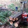伐採木搬出4回目