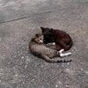 2-168   戸外猫と迷い猫のその後