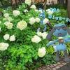 武蔵小杉からリオルが誕生日お祝い【ポケモンGOAR写真】