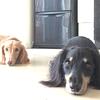 【満席!キャンセル待ち】10/1開催・正しい犬のしつけ方講座