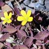 2020年4月の観察記録(植物)