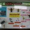 鹿児島県立博物館の企画展【あぶない かな みぢかなハチ】の標本