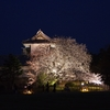 今年を振り返る「夜桜花見」