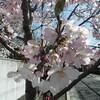 桜咲いて連続ドラマ最終回と映画「12人の…」と「いなくなれ、群青」