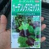 作物No.32 レタスミックスの栽培開始!種まきから定植まで