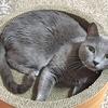 【口コミ】うちの猫はガリガリサークルスクラッチャーにどハマり!