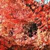 愛岐トンネル群に行ってきた!紅葉が満開で見どころ盛りだくさん!