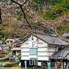 中岡慎太郎の故郷に春。