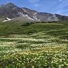 北海道キャラバン2021夏⑤〜旭岳ロープウェイと大黒屋ジンギスカン