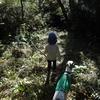 我入道の林を走る(沼津市)