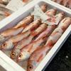2018年2月26日 小浜漁港 お魚情報